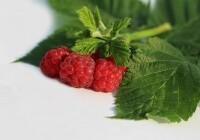 如何在树莓派上安装LEMP