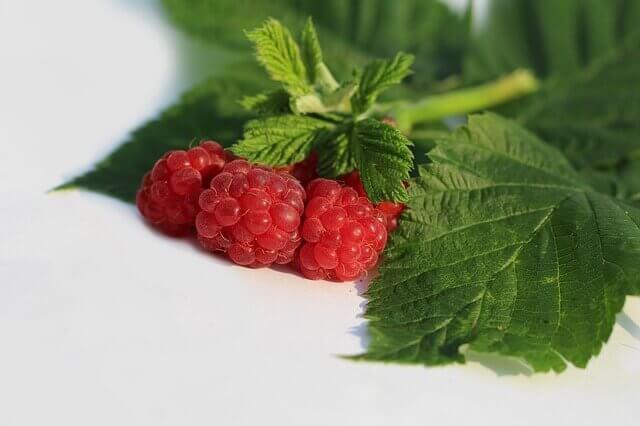 树莓派LEMP